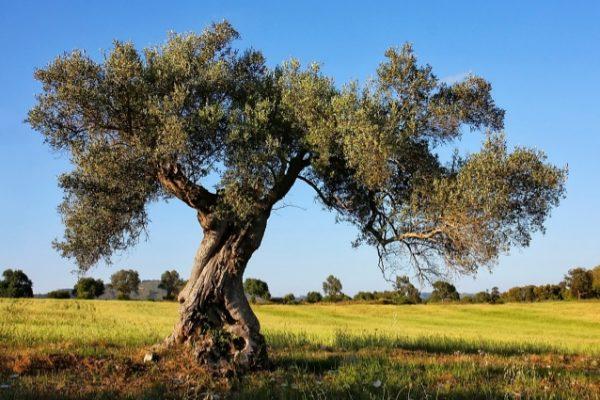 espacio olivos