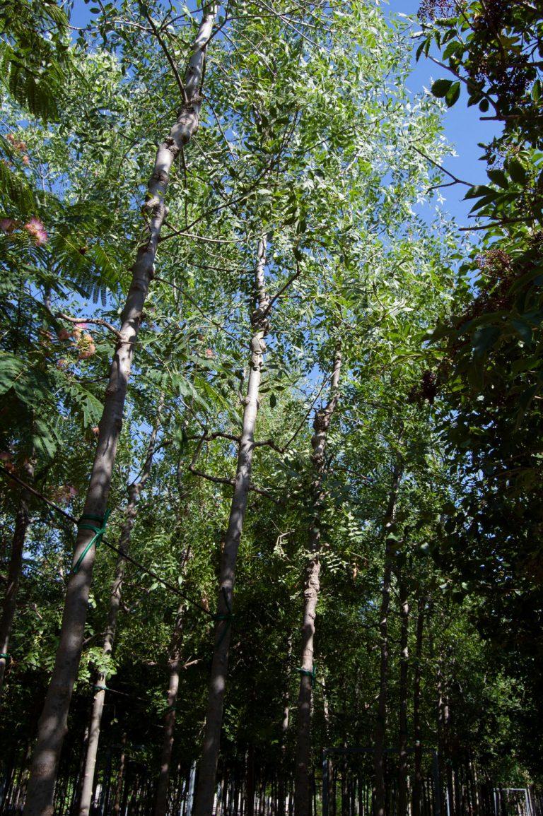 Otros árboles